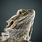 Portrait of Reptile