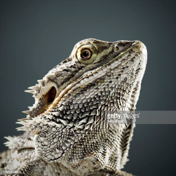 Portrait of Reptile
