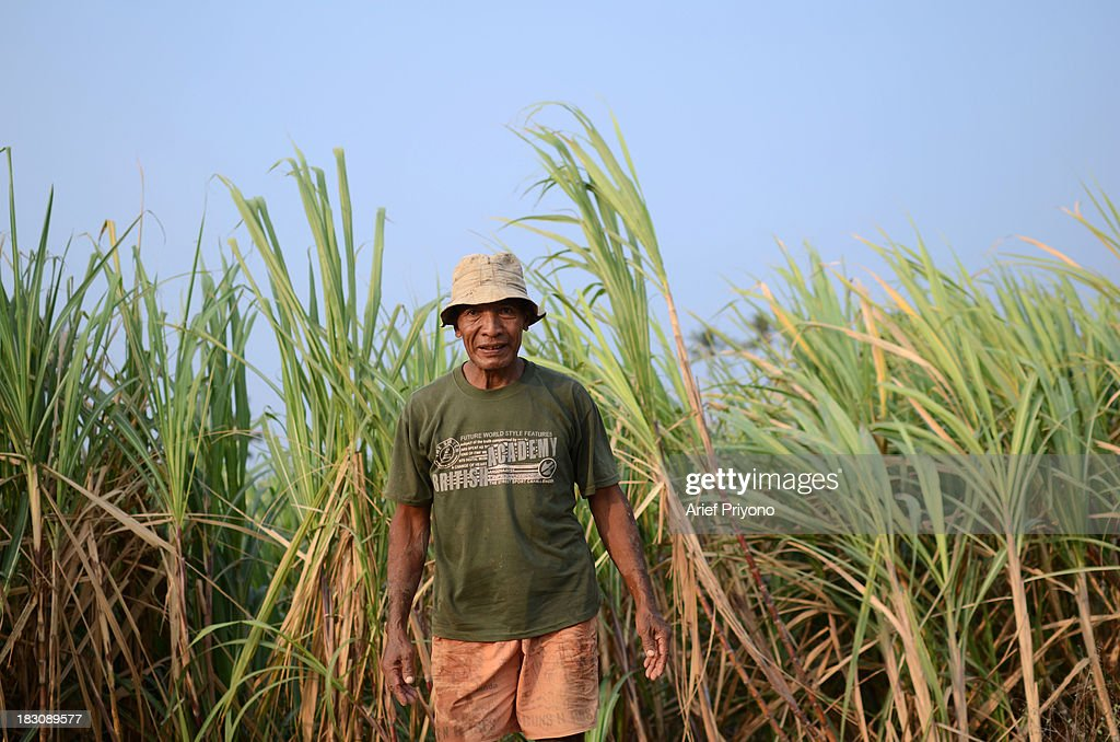 Portrait of Rivai, a farmer, in a sugarcane field in Silir village that has been converted into a brick factory. Many farmers in Indonesia have had to convert agricultural land because it is no longer profitable. Consequently Indonesian agricultural production has declined. Although Indonesia is an agricultural country, it still has to rely heavily on imported food staples such as rice, sugar, soybeans and corn. The Central Statistics Agency (BPS) announced that the number of farming households in Indonesia has decreased by 5.04 million families in the past 10 years. The 2003 Census of Agriculture claimed 31.17 million farm households. But in 2013 the number had fallen to 26.13 million. Indonesia has been listed as the world's largest sugar exporter. In 1930, when Indonesia was still called the Dutch East Indies, some 179 sugar factories produced over 3 million tons of sugar each year. Currently there are only 62 sugar factory in Indonesia..