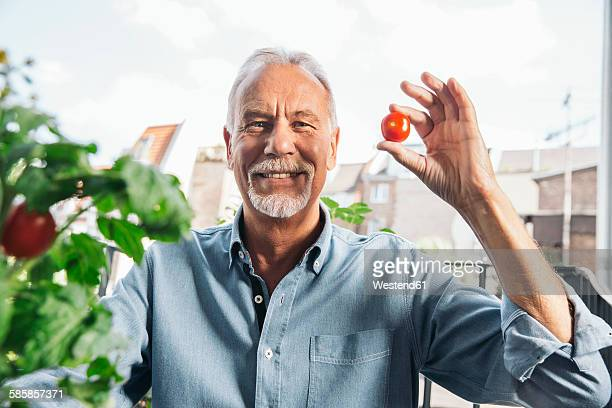 Portrait of senior man holding up a tomato from his balcony