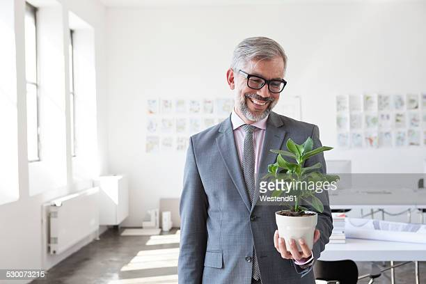 Portrait of smiling businessman looking at flower pot in an office