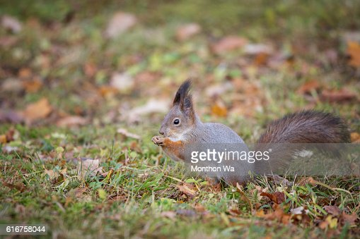Portrait Of Squirrel On Tree Trunk : Stock Photo
