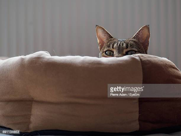 Portrait Of Tabby Cat Hiding Behind Cushion At Home