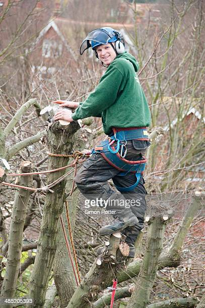 Portrait of tree surgeon in tree top