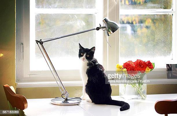 Portrait Of Tuxedo Cat Sitting By Lamp Shade And Vase Against Glass Window