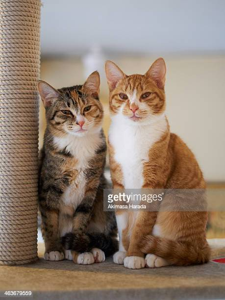 Portrait of Two Young Cats