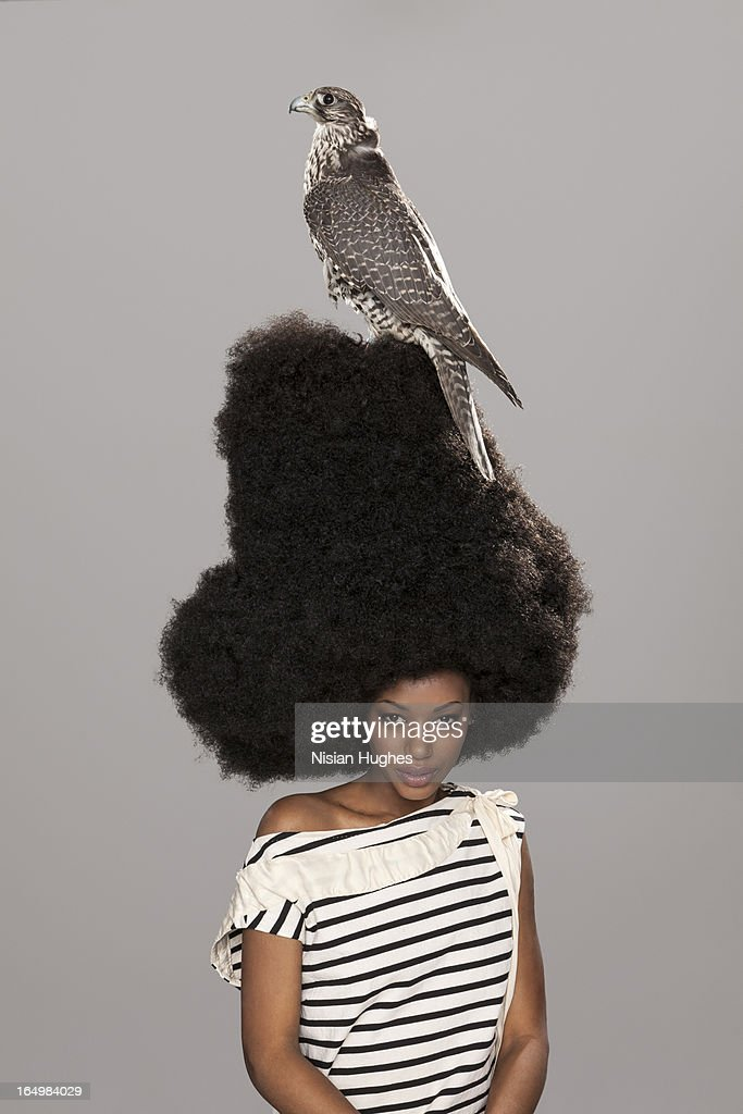 Portrait of woman with large afro, falcon on head : Stock Photo