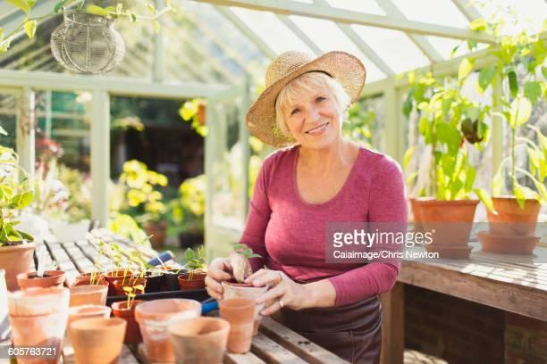 Portrait smiling senior woman potting plants in greenhouse