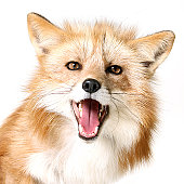 Portrrait of dog