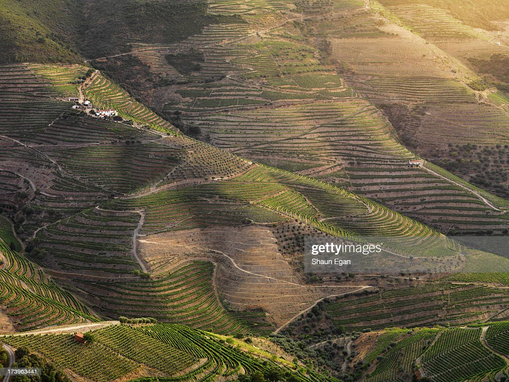 Portugal, Douro, Terraced vineyards : Stock Photo