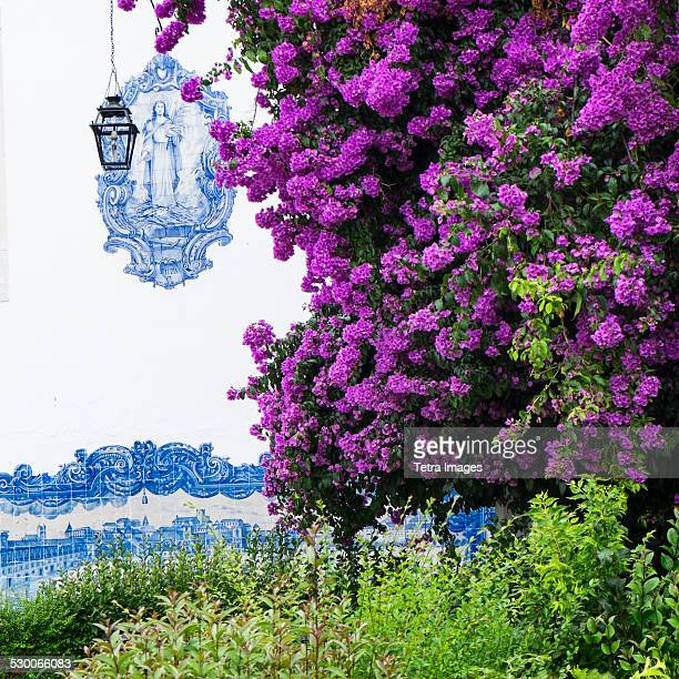 Portugal, Lisbon, Purple flowers in front of tiled Santa Luzia Church facade