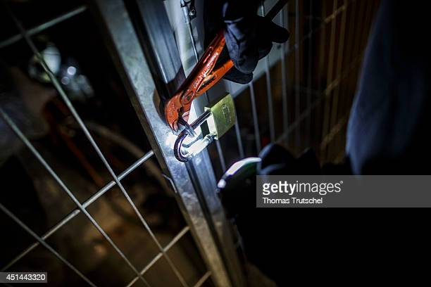 Posed scene of a man trying to open a cellar door with pliers on June 27 in Berlin Germany The photo symbolizes the increasing risk of basement...