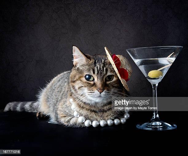 Posh cat