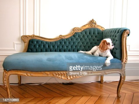 posh puppy reclines on chaise lounge stock photo getty images. Black Bedroom Furniture Sets. Home Design Ideas