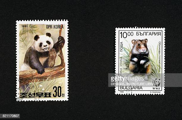 Postage stamps honouring wild animals left postage stamp depicting a panda North Korea right postage stamp depicting a hamster Bulgaria North Korea...