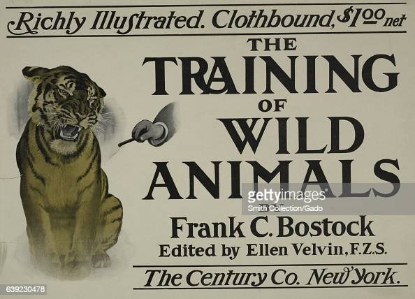 Poster advertisement for a book titled The Training of Wild Animals by Frank C Bostock which displays a tiger being prodded by a stick 1903 From the...