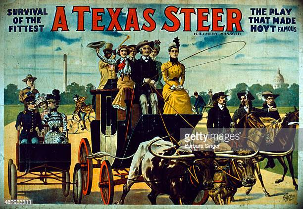Poster advertisement of Hoyt's famous American play A TEXAS STEER or MONEY MAKES THE MARE GO 1890