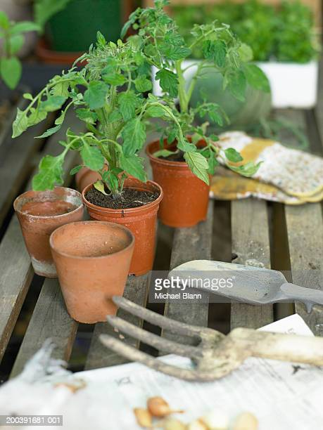 Pot plants and garden tools on shelf in greenhouse, close-up