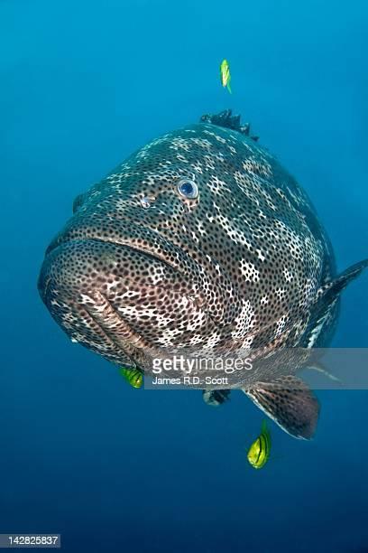 Potato Cod fish