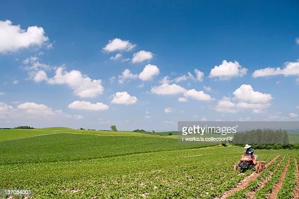 Potato field, Hokkaido Prefecture, Japan