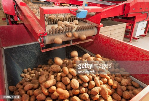 Potato Processing Machine