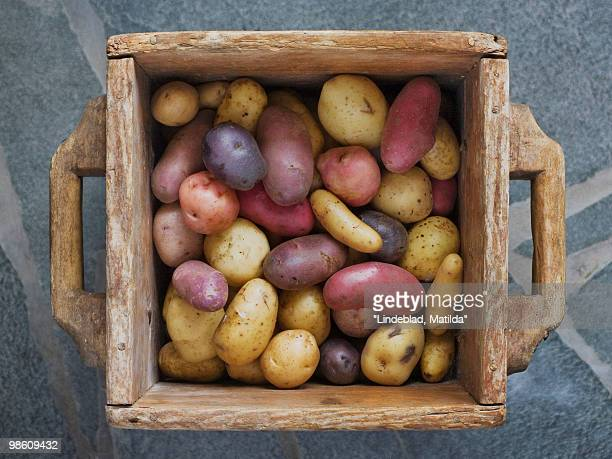 Potatoes in a tree box, Sweden.