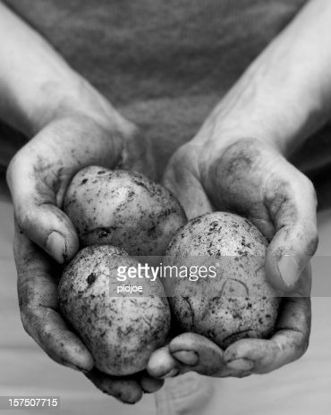 potatoes in dirty hands XXL