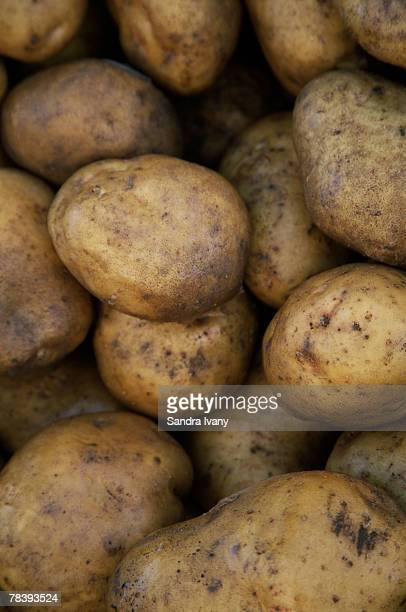 how to grow russet potatoes