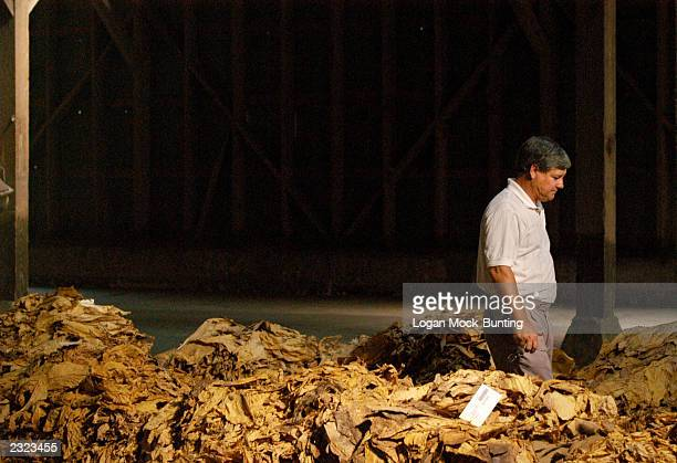 A potential bidder walks through stacks of leaf in the HiDollar Tobacco Warehouse July 29 2003 in Fairmont North Carolina North Carolina tobacco...
