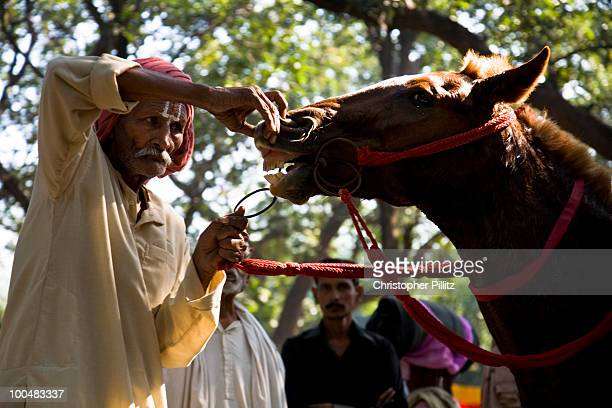 Potential horse buyer inspecting animal, Sonepur