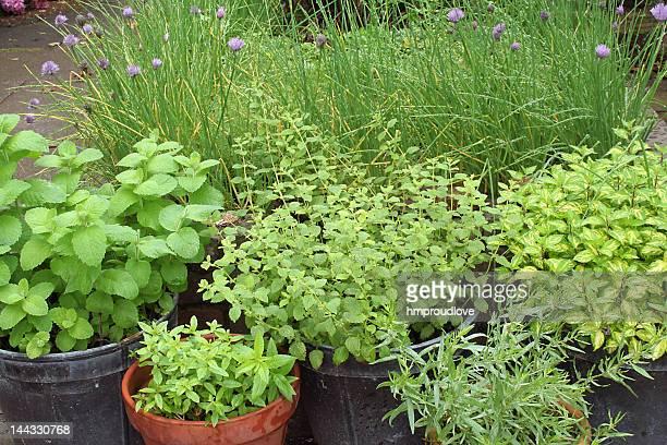 pots of herbs