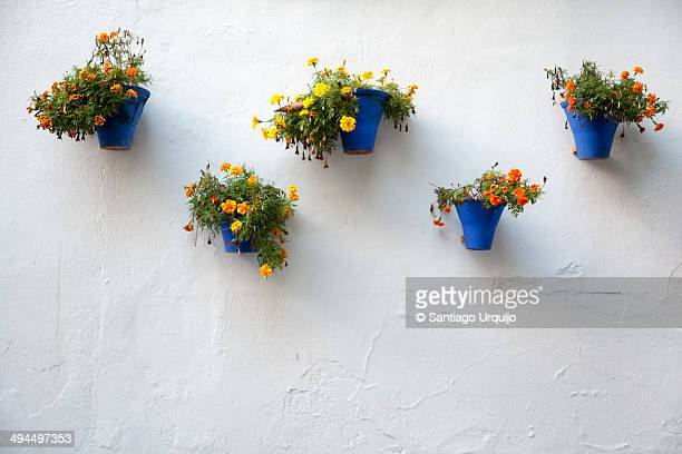Pots with flowers hanging on a whitewashed wall
