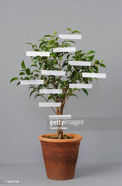 Potted 'family-tree'