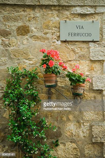 Potted flowers against a wall on an Italian street.
