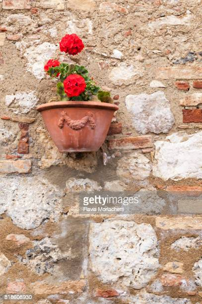 Potted flowers against ancient wall in San Gimignano, Tuscany