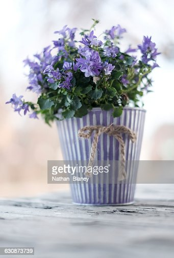 Potted Flowers : Stock Photo