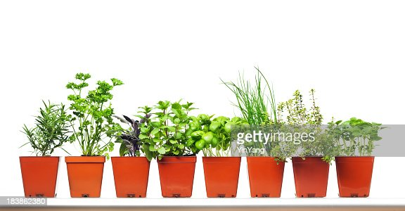 Potted Garden Herbs in Retail Plastic Container on White Background