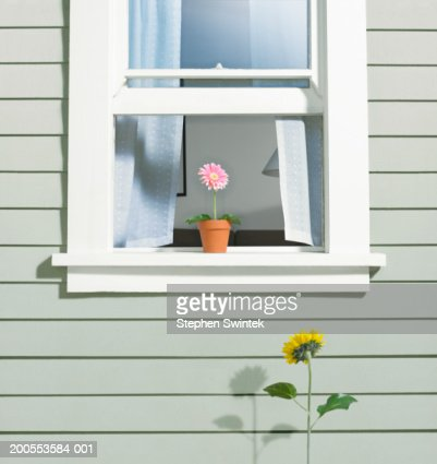 Goldfish Bowl On Exterior Window Sill Stock Photo | Getty Images