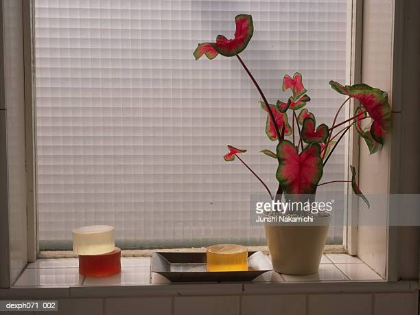 Potted plant and soap bars on window sill