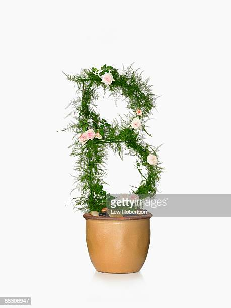 Potted plant as letter B