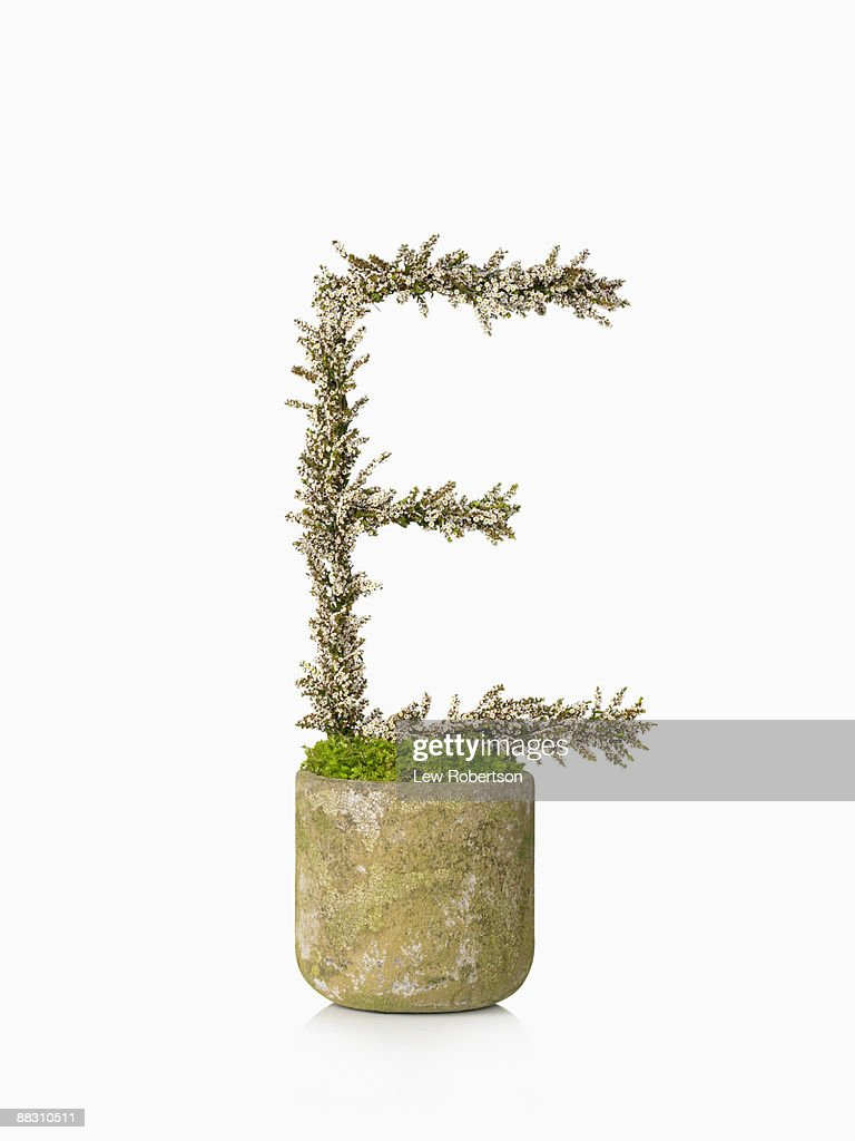 Potted plant as letter E