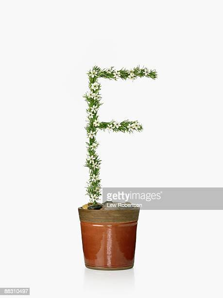 Potted plant as letter F