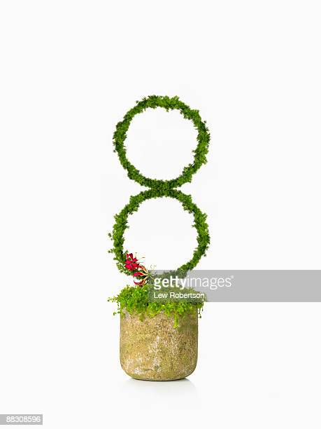 Potted plant as number eight