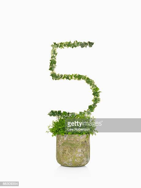 Potted plant as number five