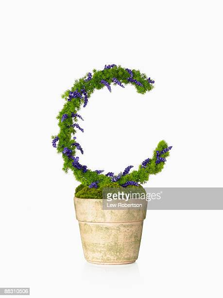 Potted plant as the letter C