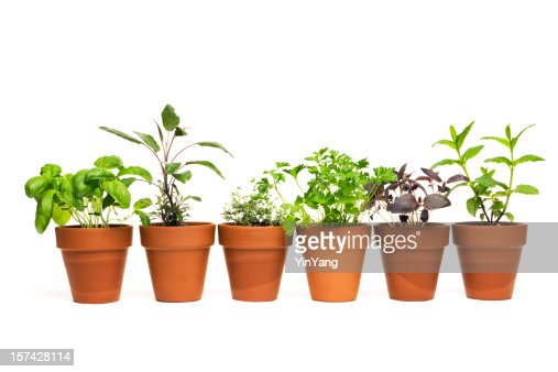 Potted Plant Herb Spice Garden in Spring Flower Pot Containers