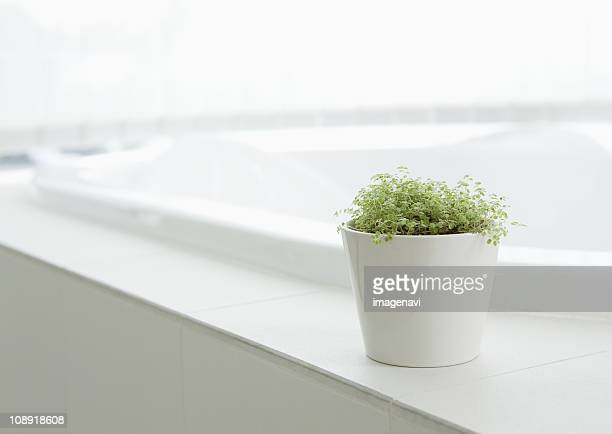 Potted plant in bathroom