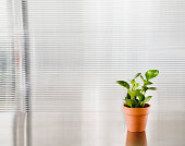 Potted plant in office