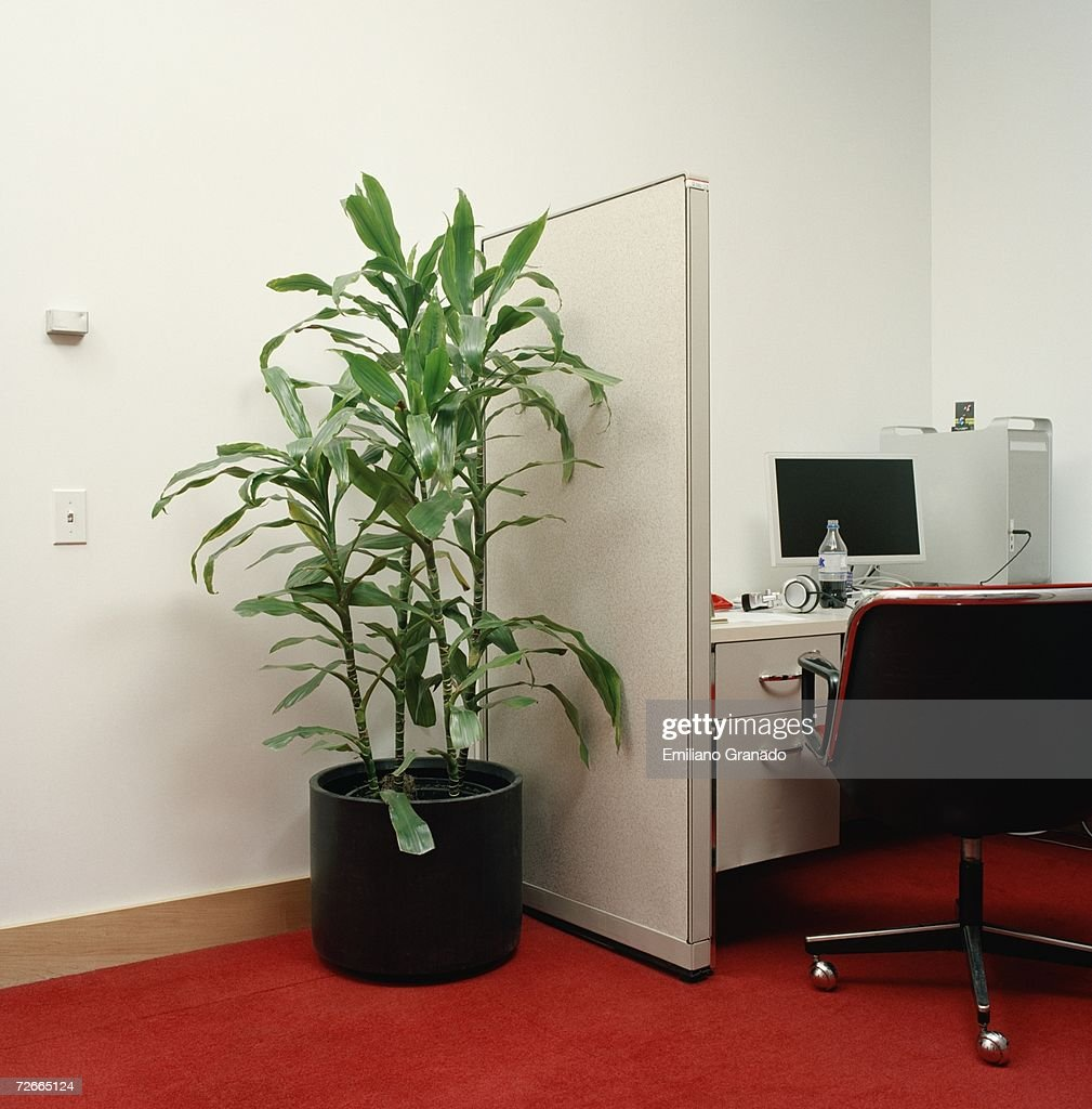 Potted Plant Next To Office Cubicle Stock Photo Getty Images