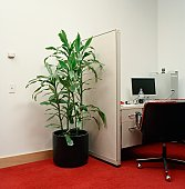 Potted plant next to office cubicle